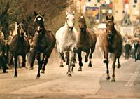 Carnevale Ronciglione riderless horses